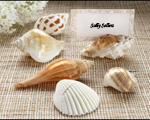 """Shells by the Sea"" Authentic Shell Placecard Holders with Matching Placecards (Set of 6)-Beach wedding card holders,placecards, reception card, place card holders, card place holders, wedding table names, placecard holders, wedding table numbers, place card holder, wedding table number ideas, wedding table cards"